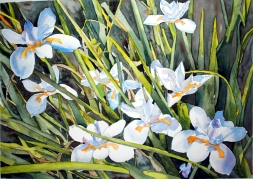 Japanese Iris, in progress painting. Working to develop the depth so that the flowers will pop forward. This is an example of several works I improving.