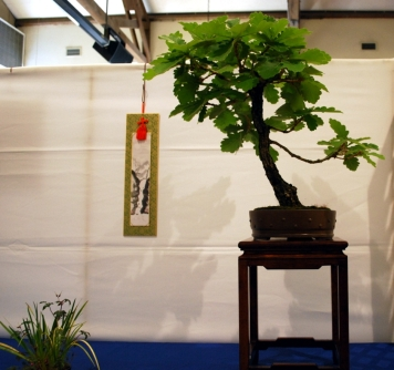 Daimyo Oak from the Kusamura Bonsai Club Show